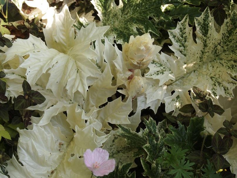 2016 茨城のお庭その3 _c0167112_792973.jpg