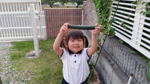 きゅうりの収穫_e0136815_08481899.jpg