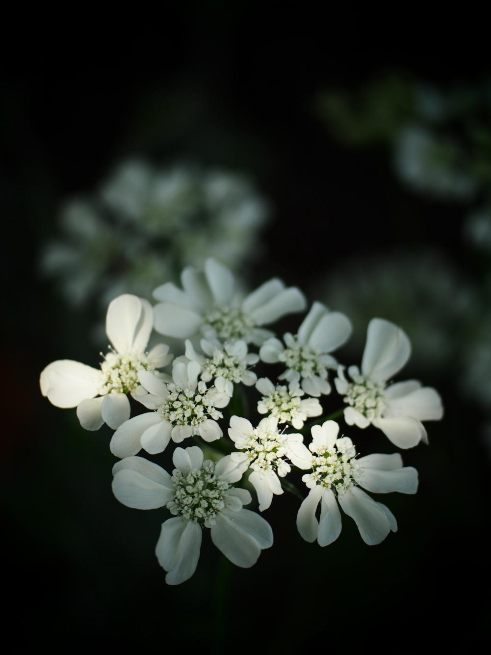 初夏の花_e0169421_21515623.jpg