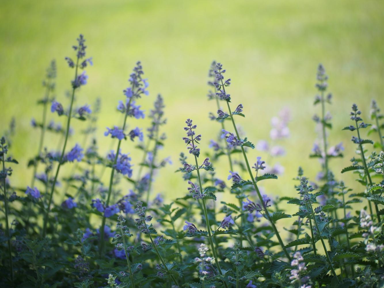 初夏の花_e0169421_21522278.jpg