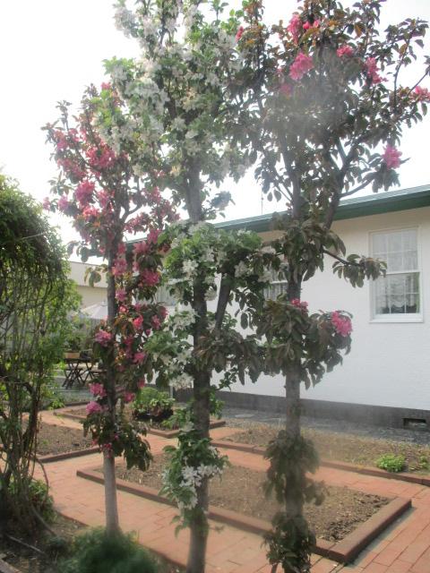 お庭の様子とデザート作り_a0279743_6455148.jpg