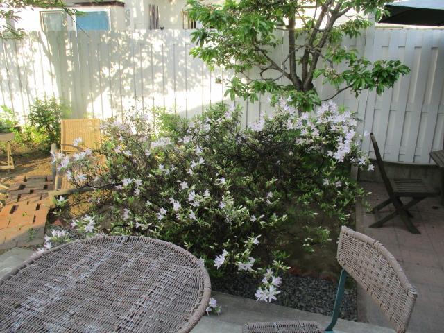 お庭の様子とデザート作り_a0279743_655522.jpg