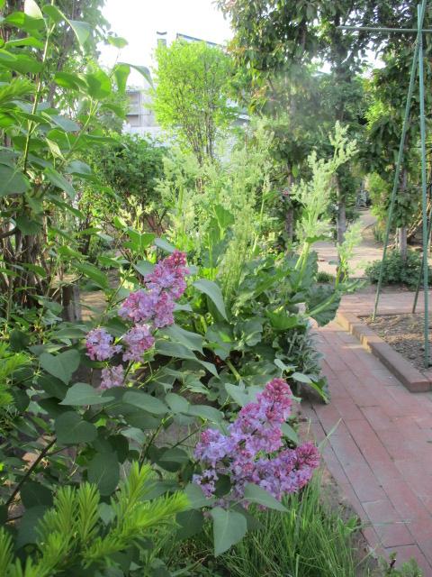 お庭の様子とデザート作り_a0279743_65878.jpg