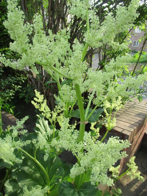 お庭の様子とデザート作り_a0279743_6594870.jpg