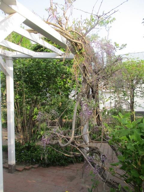 お庭の様子とデザート作り_a0279743_713173.jpg