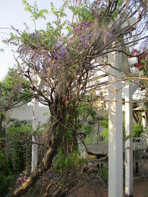 お庭の様子とデザート作り_a0279743_715643.jpg