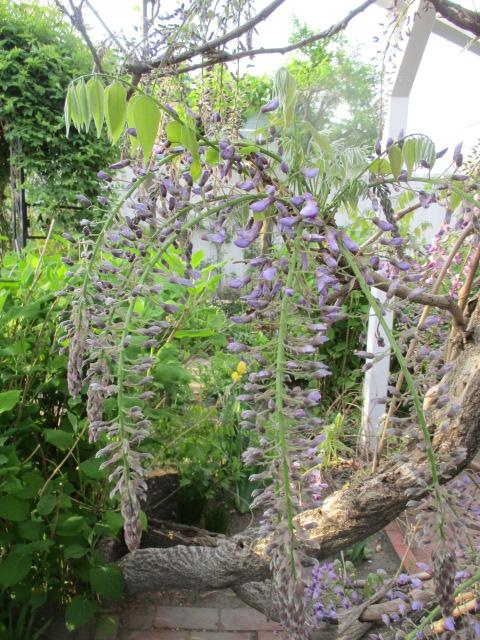 お庭の様子とデザート作り_a0279743_722771.jpg
