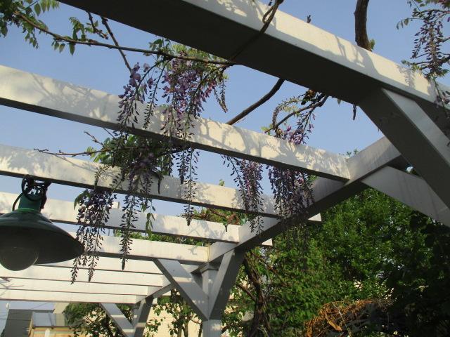 お庭の様子とデザート作り_a0279743_724891.jpg