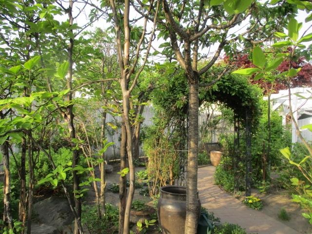 お庭の様子とデザート作り_a0279743_7333422.jpg