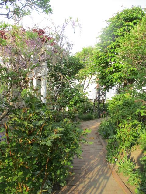 お庭の様子とデザート作り_a0279743_75989.jpg