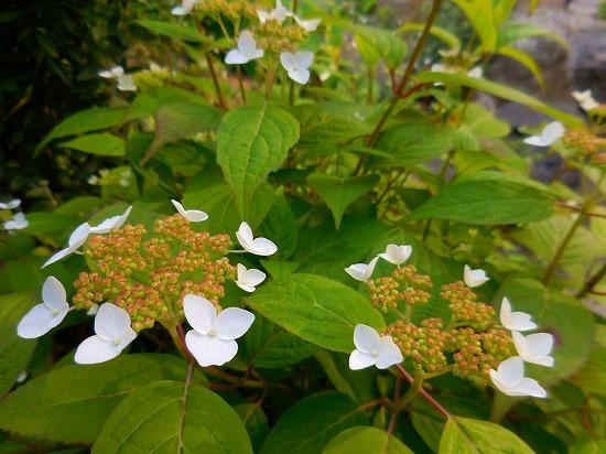 今朝の庭_c0327752_11262761.jpg