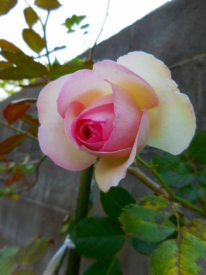 今朝の庭_c0327752_11280209.jpg