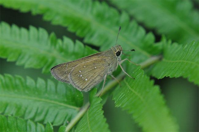 西表島憧れの蝶探し。_e0194952_21906.jpg