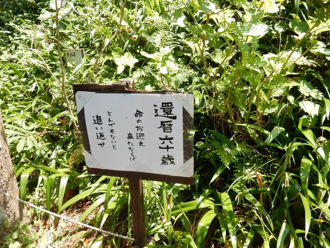 '16,5,24(火)続・花野辺の里散策!_f0060461_11145291.jpg