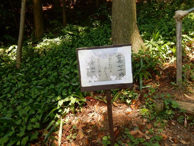 '16,5,24(火)続・花野辺の里散策!_f0060461_11162582.jpg