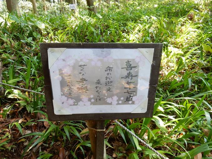 '16,5,24(火)続・花野辺の里散策!_f0060461_11183534.jpg