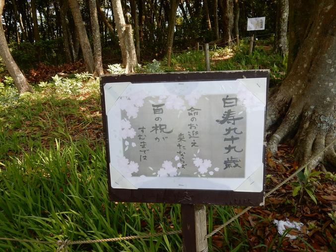 '16,5,24(火)続・花野辺の里散策!_f0060461_11213521.jpg