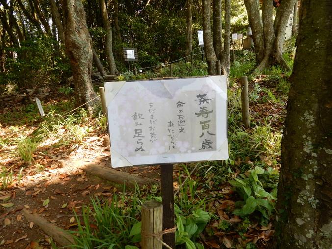 '16,5,24(火)続・花野辺の里散策!_f0060461_1122098.jpg