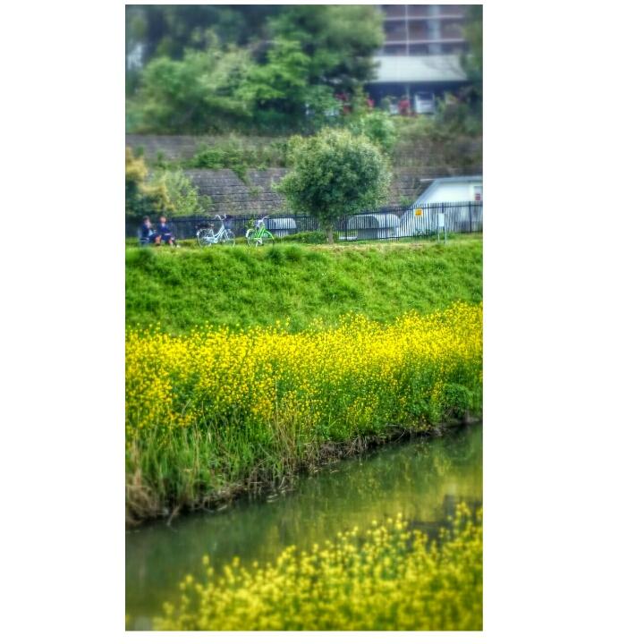 f0360974_10353403.jpg