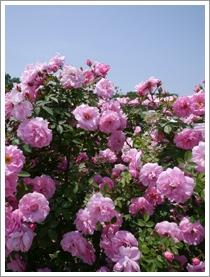 花フェスタ記念公園2016④_b0142989_2101465.jpg
