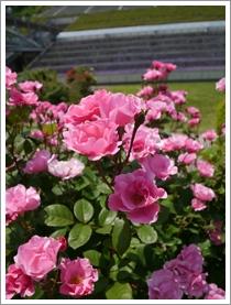 花フェスタ記念公園2016④_b0142989_21756.jpg