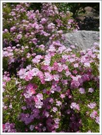 花フェスタ記念公園2016④_b0142989_2192026.jpg