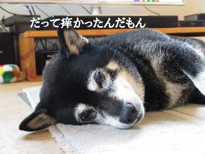 無くて七癖_f0068501_2205990.jpg