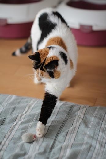 10歳保護猫さん、ネズミと戯れる_e0151545_21475345.jpg