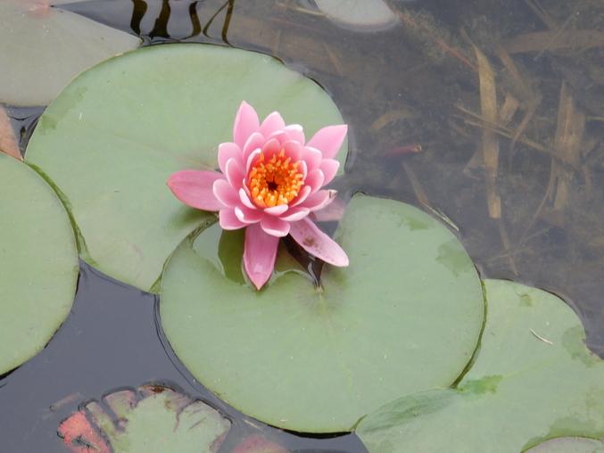 '16,5,25(水)種から育てるって面白い!_f0060461_9455514.jpg