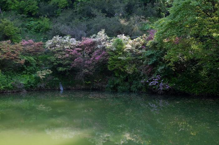 大阪市立大学理学部附属植物園_f0021869_2228352.jpg