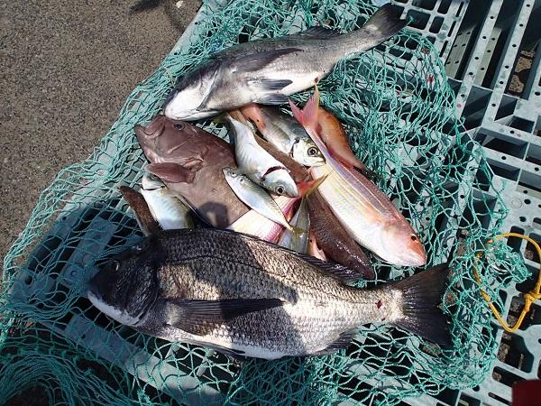いまりマリーナの釣り大会♪_a0077071_15452513.jpg