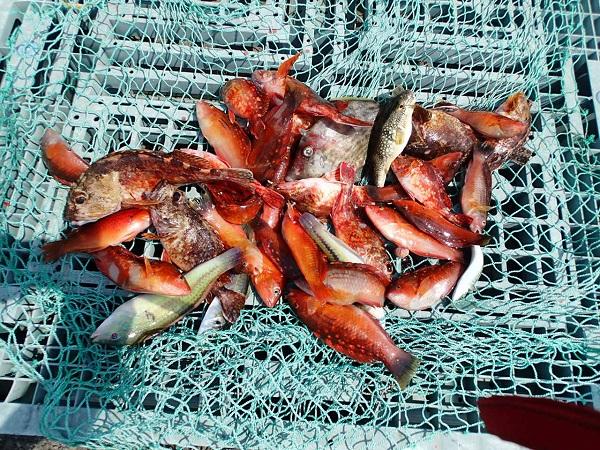 いまりマリーナの釣り大会♪_a0077071_15492331.jpg