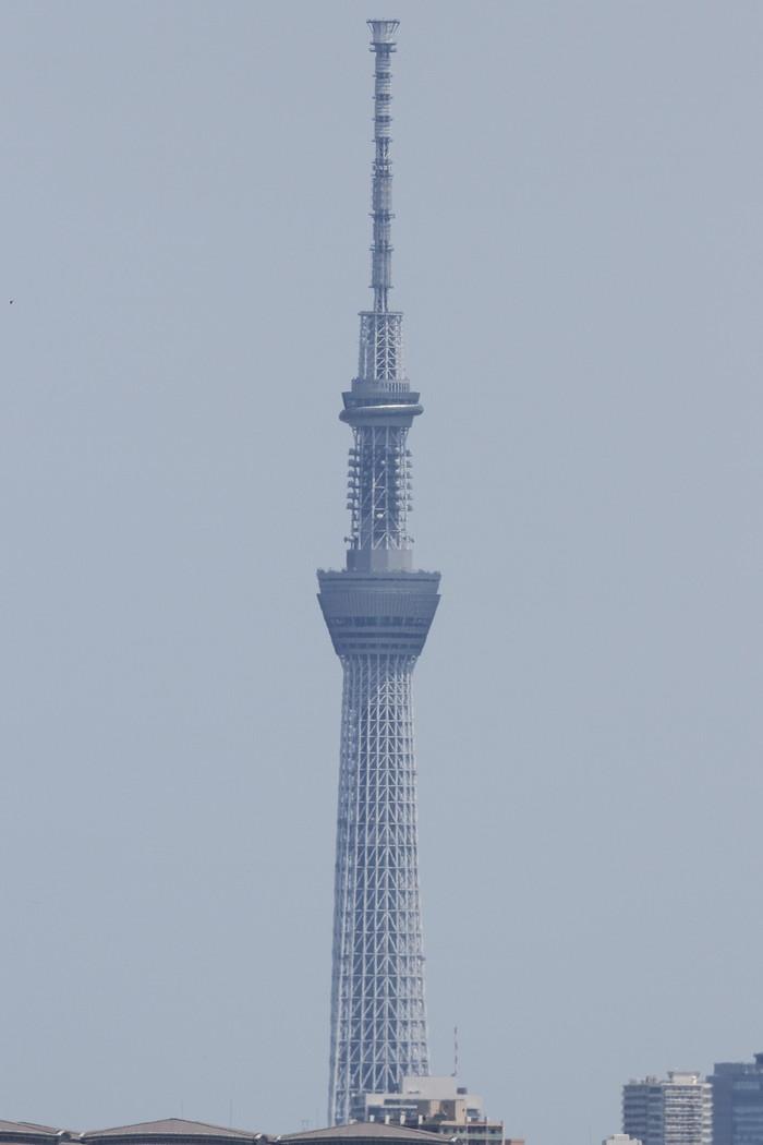 5月22日 羽田空港_c0247982_6164624.jpg