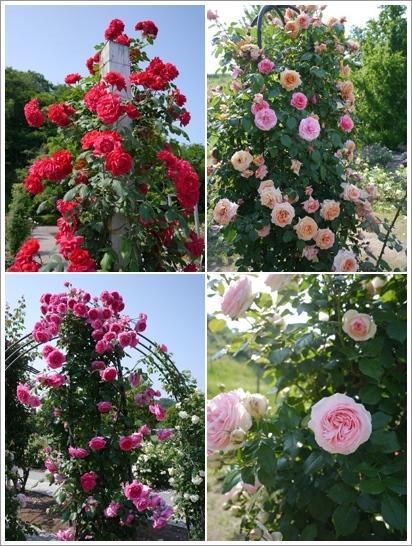 花フェスタ記念公園2016⑥_b0142989_20413960.jpg