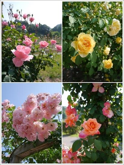 花フェスタ記念公園2016⑥_b0142989_20463114.jpg
