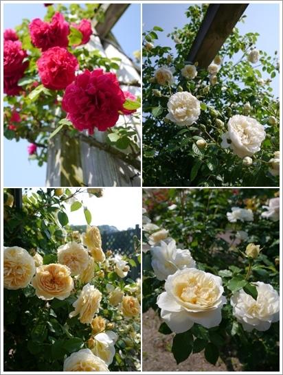 花フェスタ記念公園2016⑥_b0142989_20583183.jpg