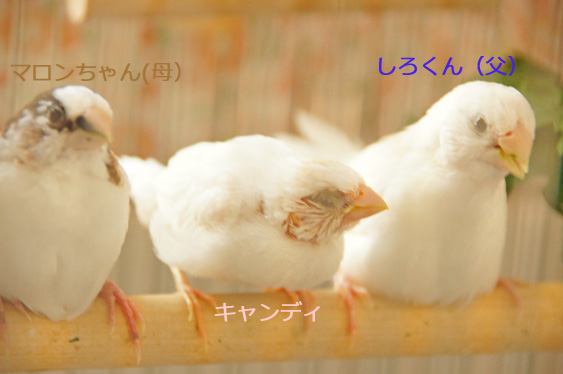 c0139591_10154064.jpg
