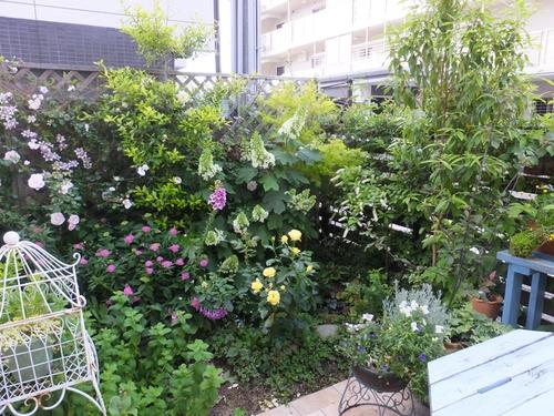 現在の庭_f0035506_0153039.jpg