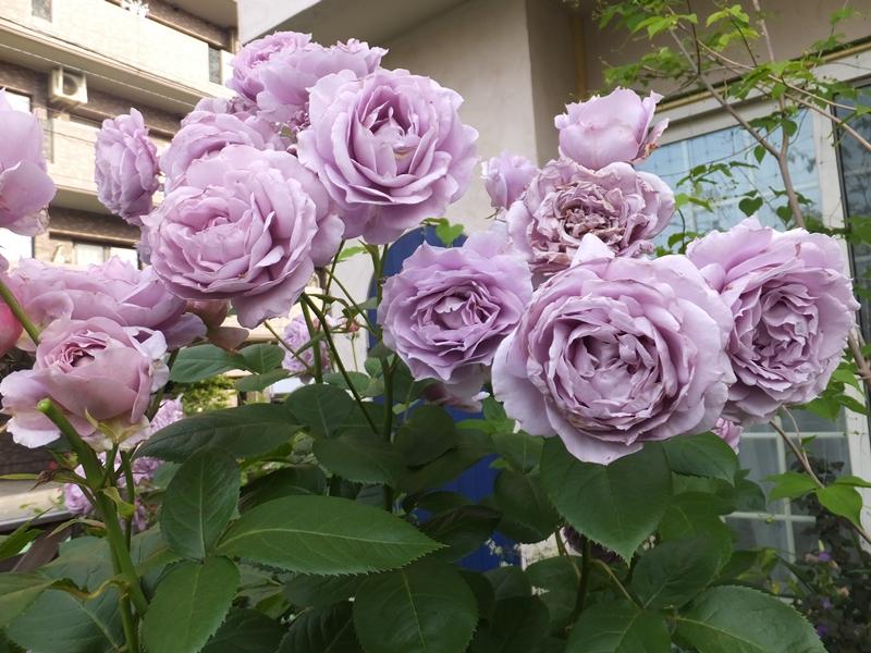 現在の庭_f0035506_016523.jpg