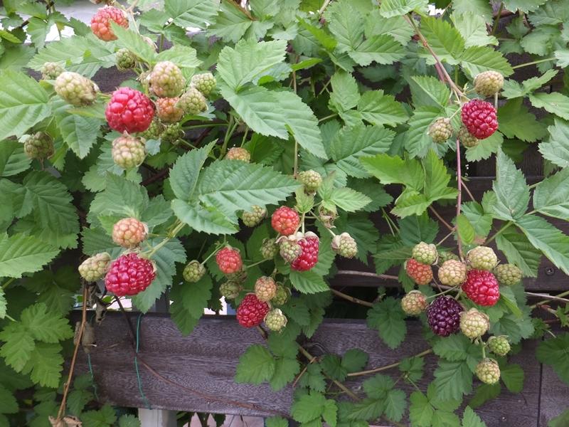 現在の庭_f0035506_0174437.jpg