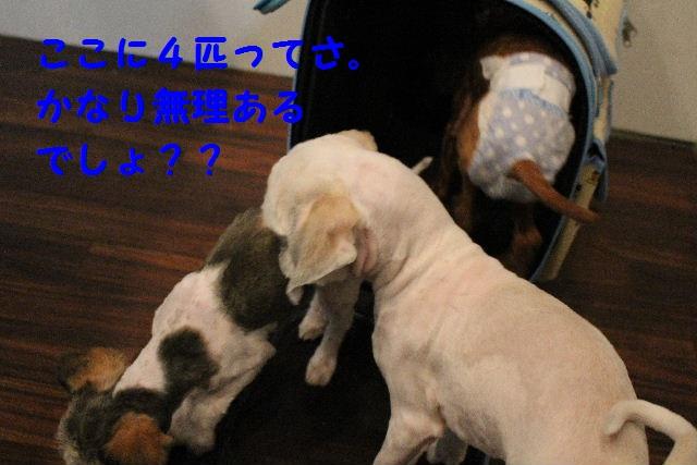 b0130018_103767.jpg