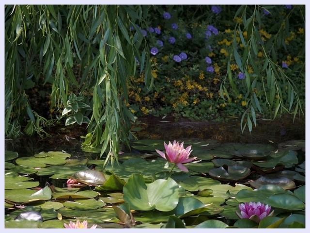 ■ モネの庭_b0148920_18224481.jpg