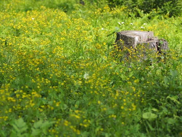 黄色い森_e0169421_2123381.jpg