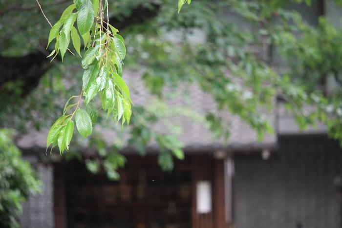 """""""葵の寺紋""""のある寺院。。_a0214329_1471419.jpg"""