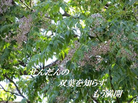 d0164636_8134778.png