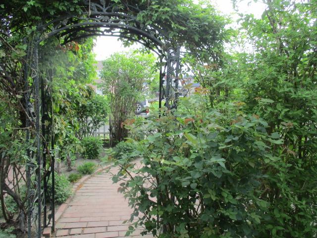 お庭の藤が綺麗_a0279743_817295.jpg
