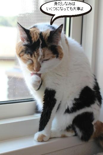 今日の保護猫さん達_e0151545_21115651.jpg