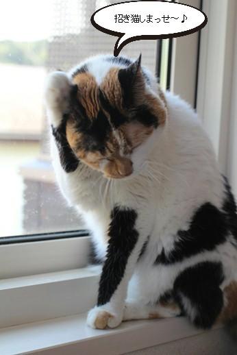 今日の保護猫さん達_e0151545_21120670.jpg