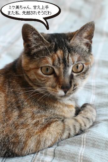 今日の保護猫さん達_e0151545_21121868.jpg