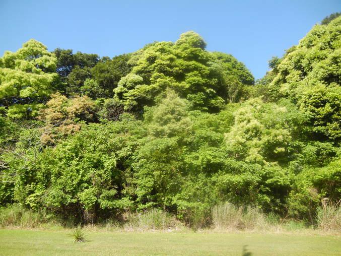 '16,5,26(木)挿し木で増やすのも面白いYO!_f0060461_14324837.jpg